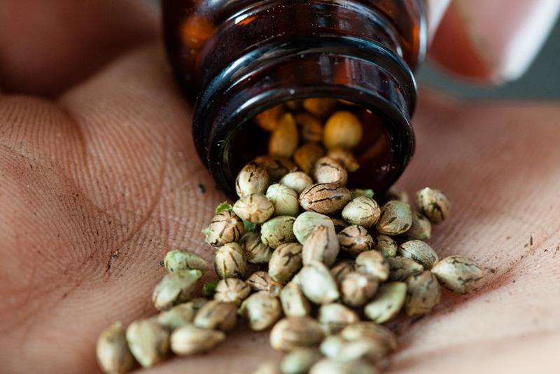 Buying the Best Marijuana Seeds Online